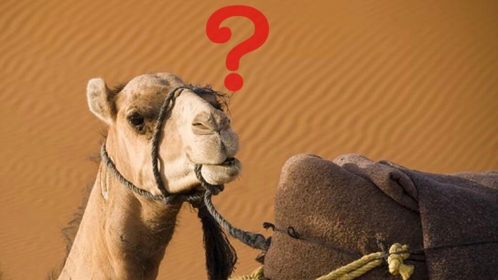 モロッコのラクダ