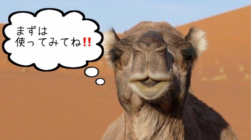 ラクダが話している様子
